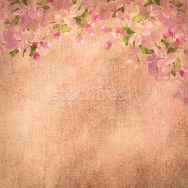 Bahar kiraz çiçeği boyama bağbozumu sakura çiçekler Stok fotoğraf © kostins