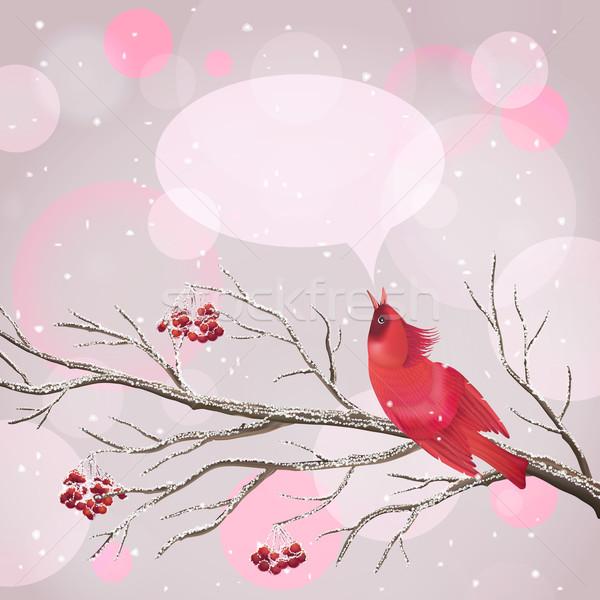 Christmas Vector Snowy Rowan Berries Bird Card Stock photo © kostins