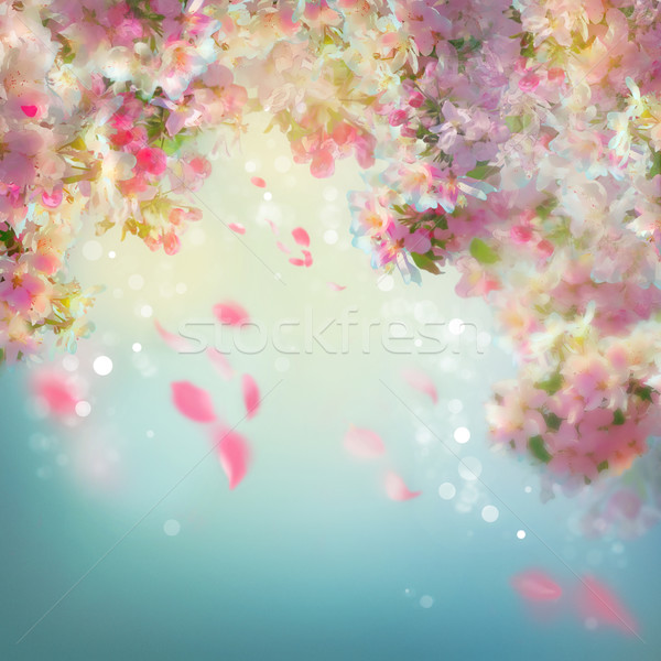 Spring Cherry Blossom Background Stock photo © kostins