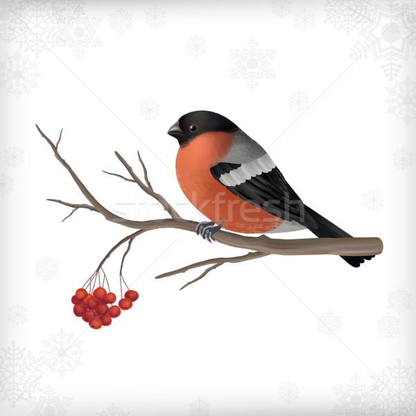Winter Bird Bullfinch Tree Branches Stock photo © kostins