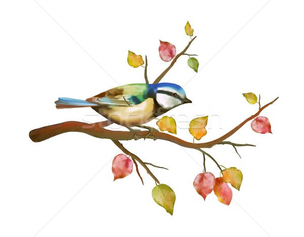 акварель птица Тит осень филиала рисованной Сток-фото © kostins