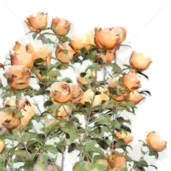 Flower Watercolor Roses Bush Stock photo © kostins