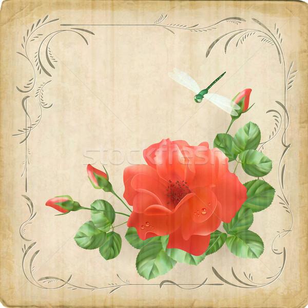 ヴィンテージ 花 トンボ レトロな カード 国境 ストックフォト © kostins