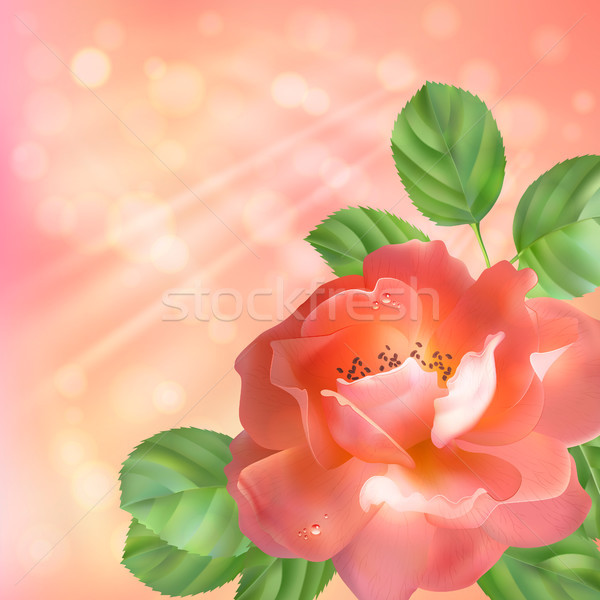 Floral background with rose, sun and blur Stock photo © kostins