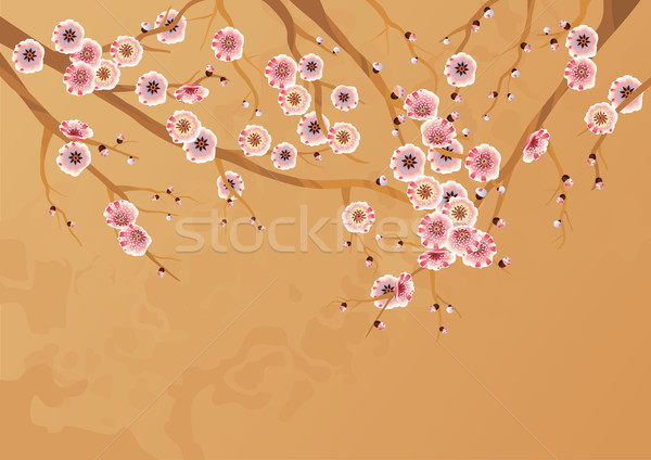 Spring cherry blossoms  Stock photo © kostins