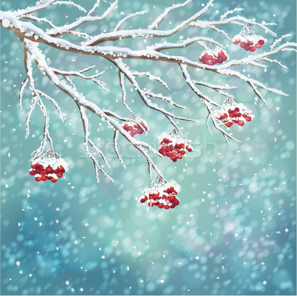 Winter snow-covered rowanberry branch background Stock photo © kostins