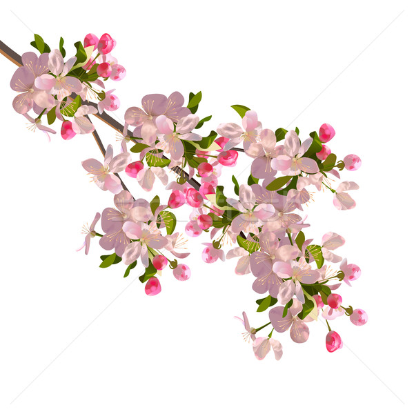 Cherry blossoms branch Stock photo © kostins