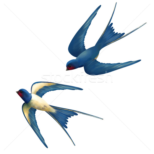 Vector Flying Swallows Stock photo © kostins