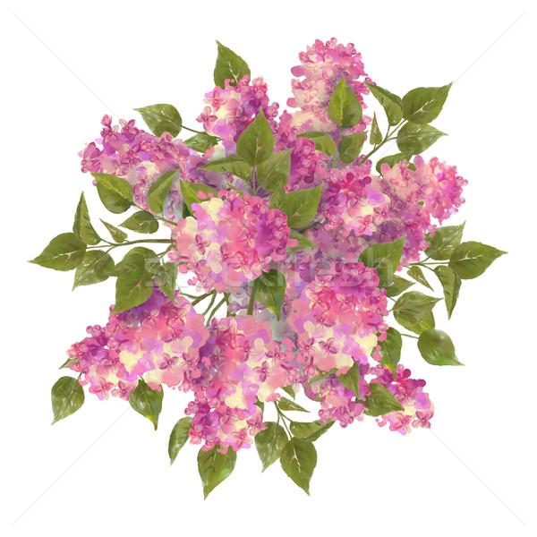 Vízfesték rajz orgona virágcsokor fehér kert Stock fotó © kostins
