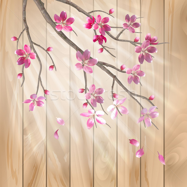 Spring cherry blossom flowers on a wood texture Stock photo © kostins