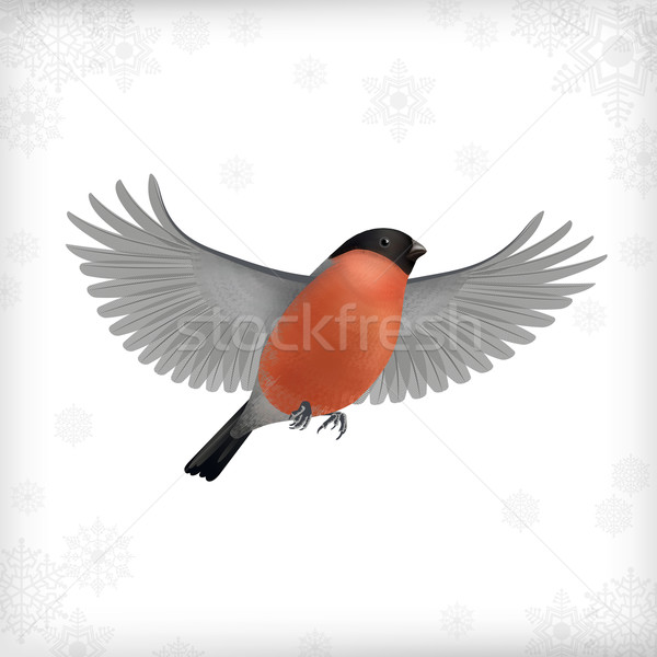 Winter Christmas Flying Bird Bullfinch Stock photo © kostins