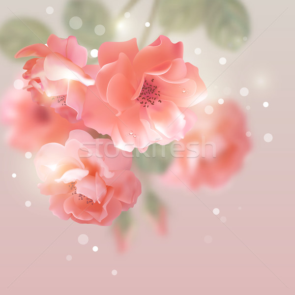 Stock photo: Shining vector flowers roses