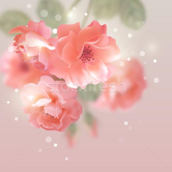 Shining vector flowers roses  Stock photo © kostins