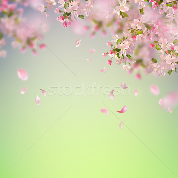 Spring Cherry Blossom Vector Illustration 169 Nadezhda Kostina Kostins 8784095 Stockfresh