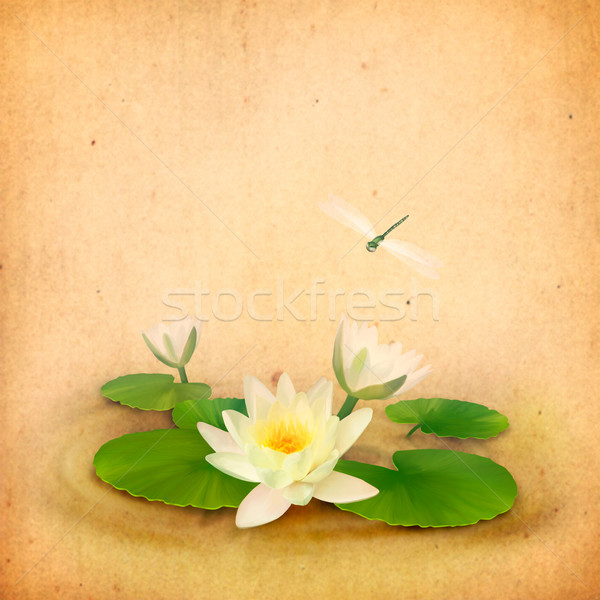 Water lily (lotus) and dragonfly aquatic drawing Stock photo © kostins