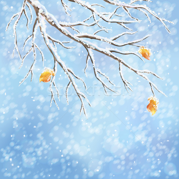 Winter vector snow-covered frost branch background Stock photo © kostins