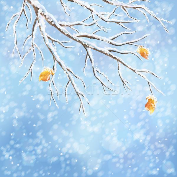 Inverno vetor geada ramo congelada árvore Foto stock © kostins