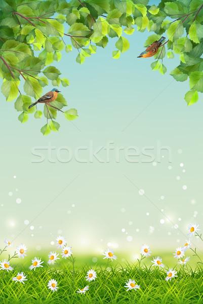 Vecteur été paysage deux oiseaux herbe Photo stock © kostins