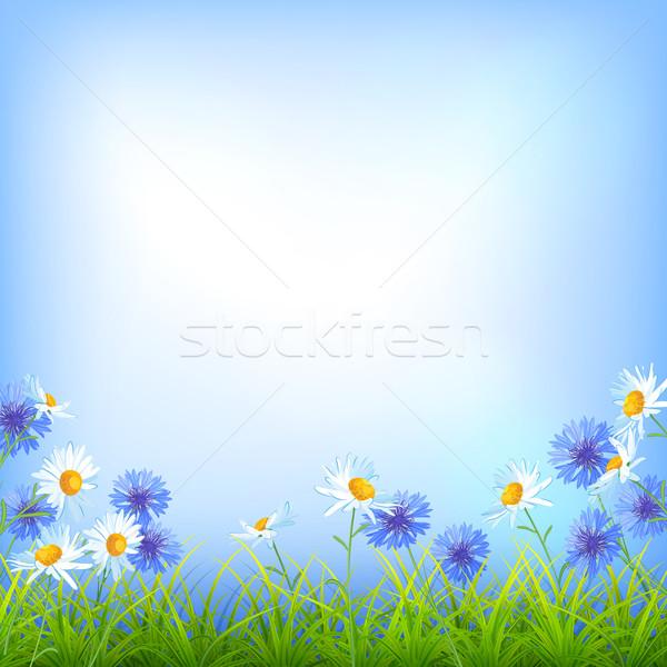 Dziedzinie kwiaty Daisy chaber trawy wektora Zdjęcia stock © kostins