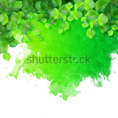 Vector watercolor spot with green leaves Stock photo © kostins