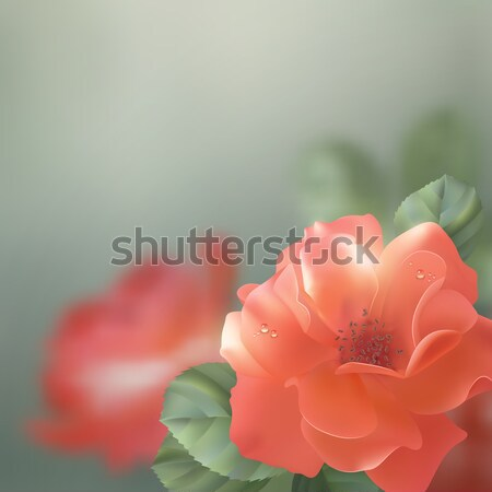 Shining vector flowers roses  Stock photo © kostins
