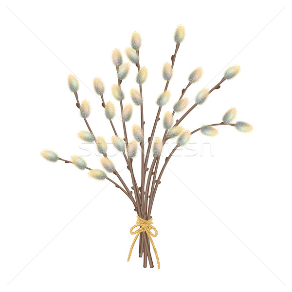 Pussy Willow Branches Stock photo © kostins
