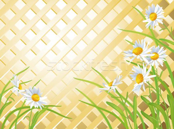 Daisies Stock photo © kostins
