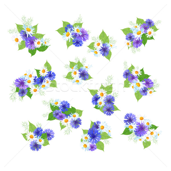 Полевые цветы набор вектора лист лет праздник Сток-фото © kostins