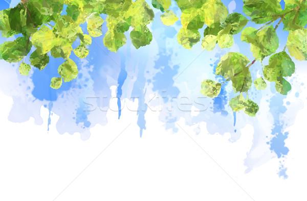 Сток-фото: зеленые · листья · дерево · вектора · акварель · лет