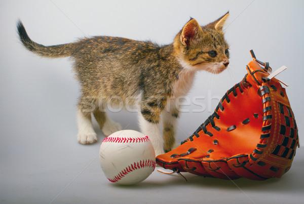 Cat and baseball Stock photo © Koufax73