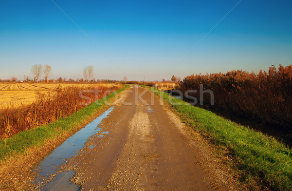 Road in the country Stock photo © Koufax73