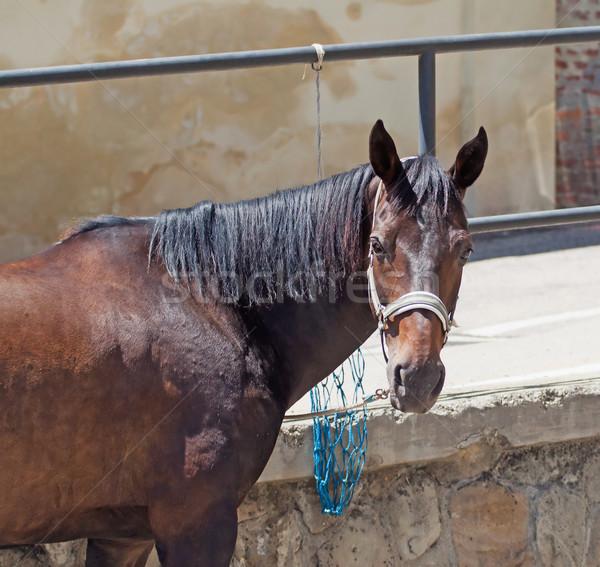 Horse Stock photo © Koufax73
