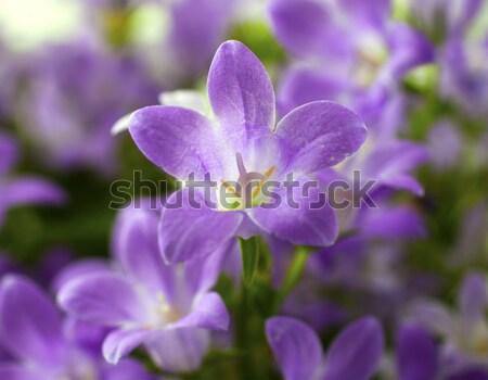 Közelkép egy virág tavasz nap üveg kék Stock fotó © Koufax73