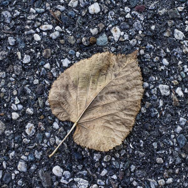 葉 死んだ アスファルト hdr 広場 画像 ストックフォト © Koufax73