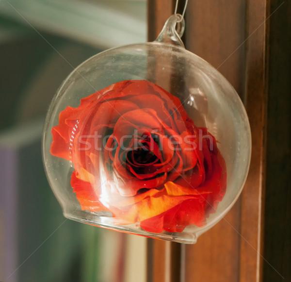 Rosa vetro Rose Red campana decorazione acqua Foto d'archivio © Koufax73