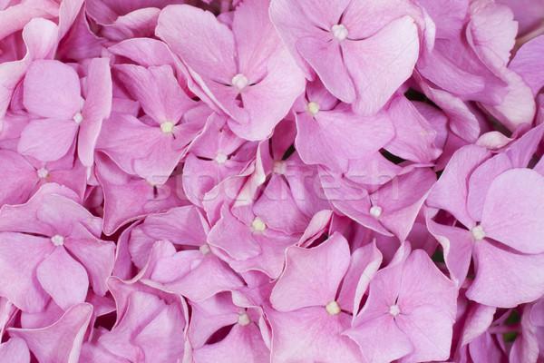 Background of flowers Stock photo © Koufax73