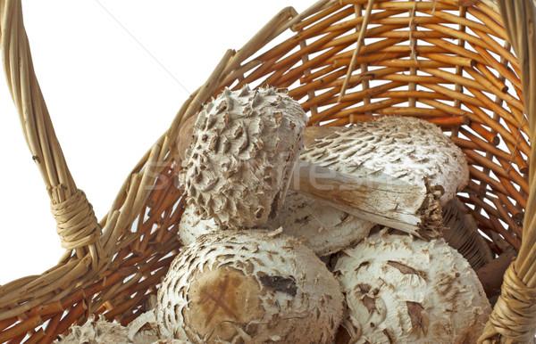 Mushrooms Stock photo © Koufax73