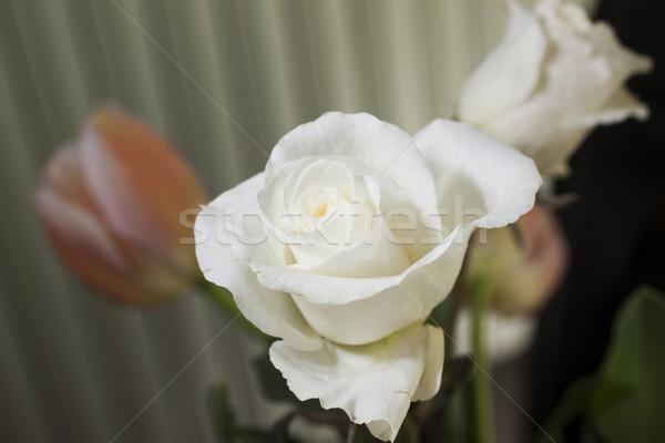 白 バラ 浅い 花 葉 ストックフォト © Koufax73