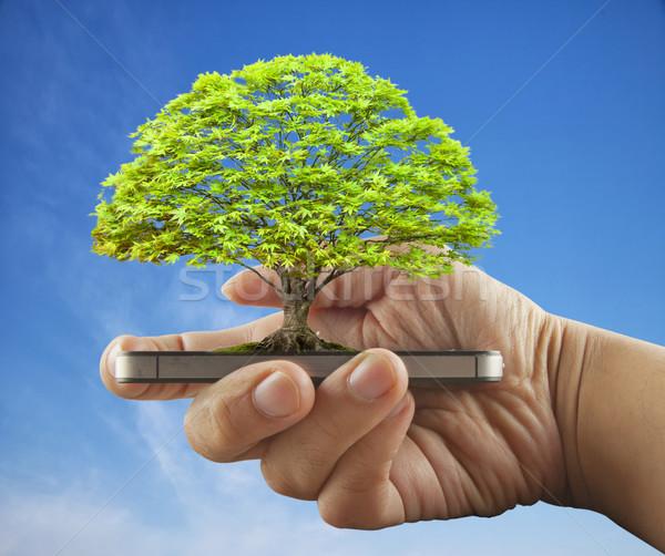 árvore crescente masculino mão blue sky Foto stock © Koufax73