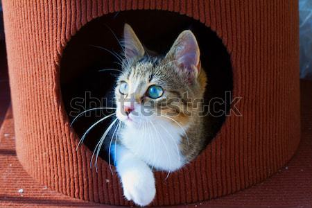 Cat out of a hole Stock photo © Koufax73