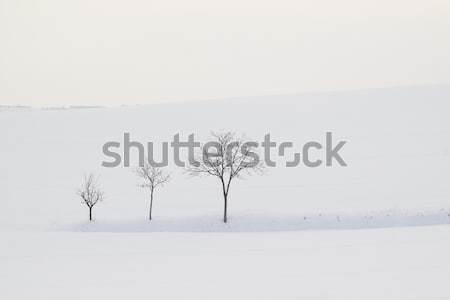 Trees Stock photo © Koufax73