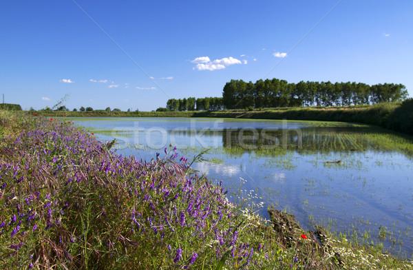 Bloemen kant rijstveld veel kleuren water Stockfoto © Koufax73