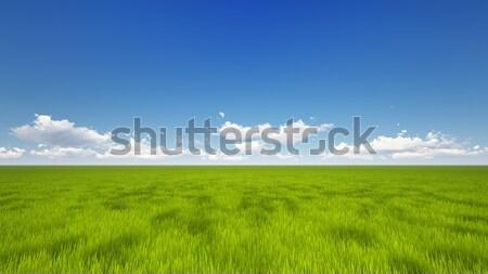 Groene veld hoog kwaliteit geven blauwe hemel Stockfoto © kravcs