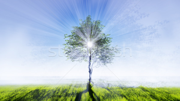 Signle tree in the field Stock photo © kravcs