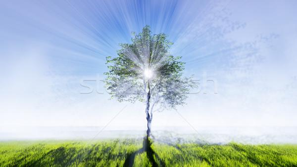 дерево области Постоянный зеленая трава солнце Сток-фото © kravcs