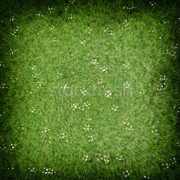 Groen gras gazon hoog kwaliteit afbeelding weide Stockfoto © kravcs