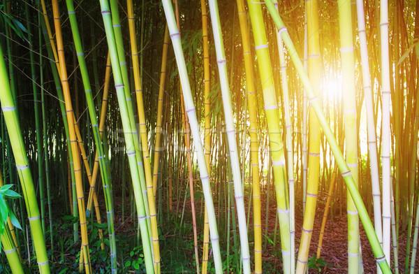 Bamboe bos dawn zonsondergang zomer groene Stockfoto © kravcs