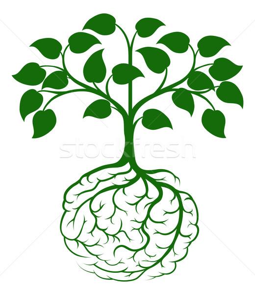 Brain root tree Stock photo © Krisdog