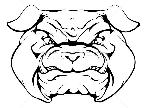 Bulldog Stock photo © Krisdog