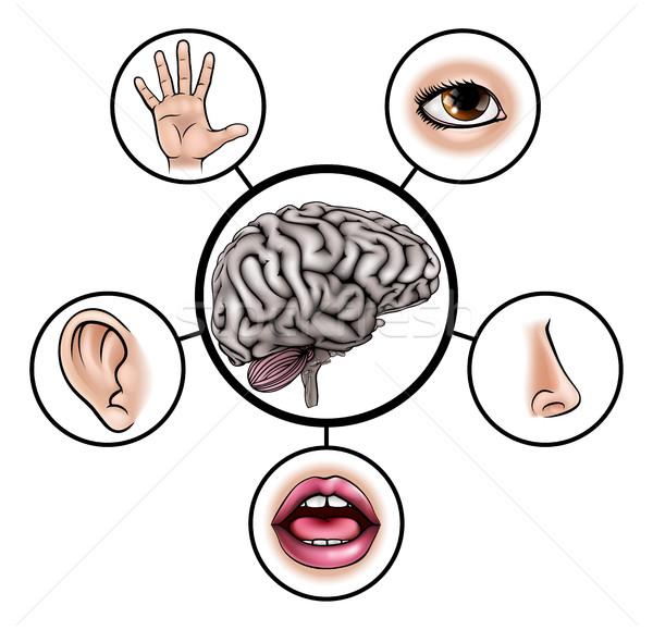 Vijf hersenen wetenschap onderwijs illustratie iconen Stockfoto © Krisdog